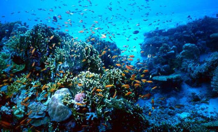 Национальный мальтийский аквариум
